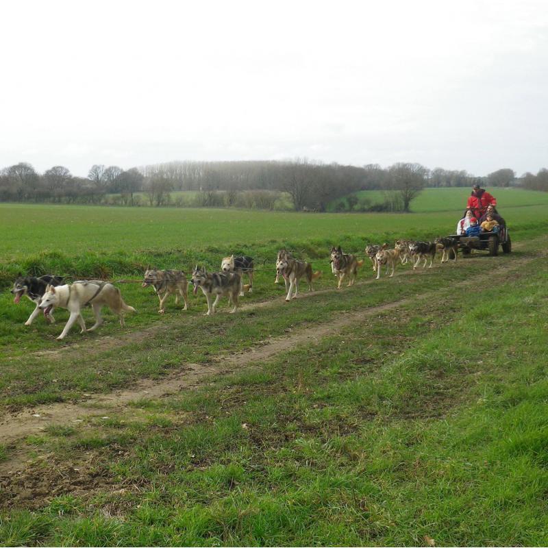 Balade en kart avec chiens attelés