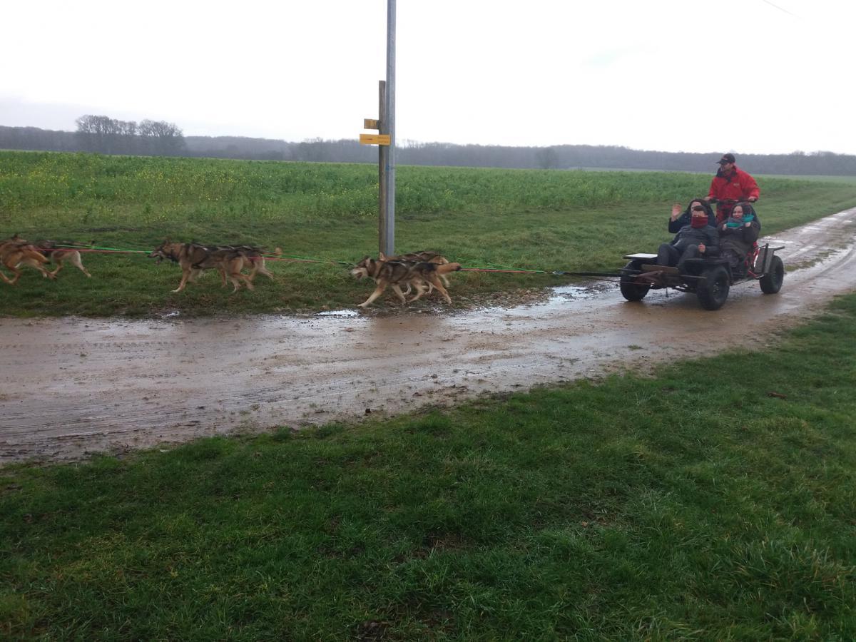 Balade en kart avec chien de traineau en Sarthe<br>
