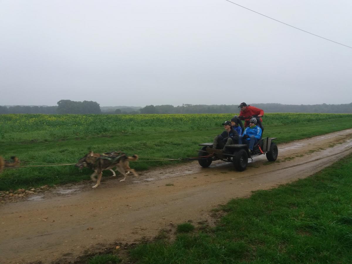 Balade en kart avec chien de traineau en Sarthe