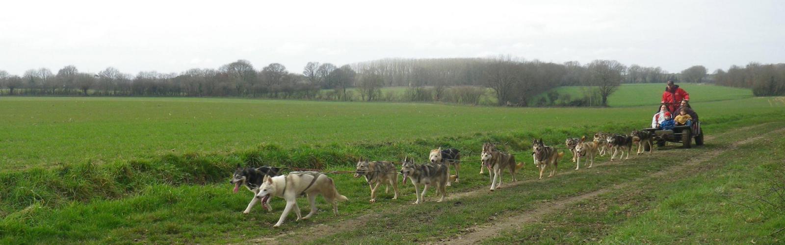 Les Crocs Blancs sarthois - Balade en kart avec chiens attelés<br>