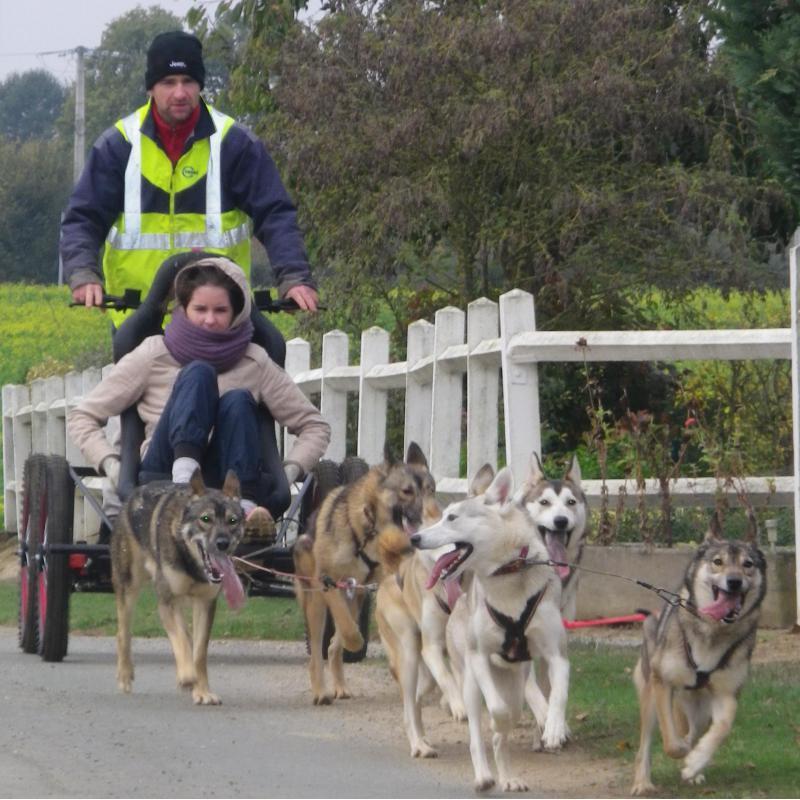 Balade en kart avec chiens attelés<br>